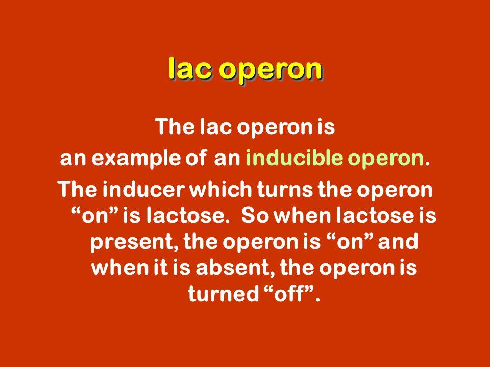 an example of an inducible operon.