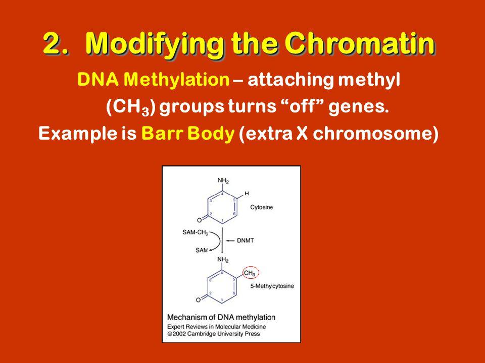 2. Modifying the Chromatin