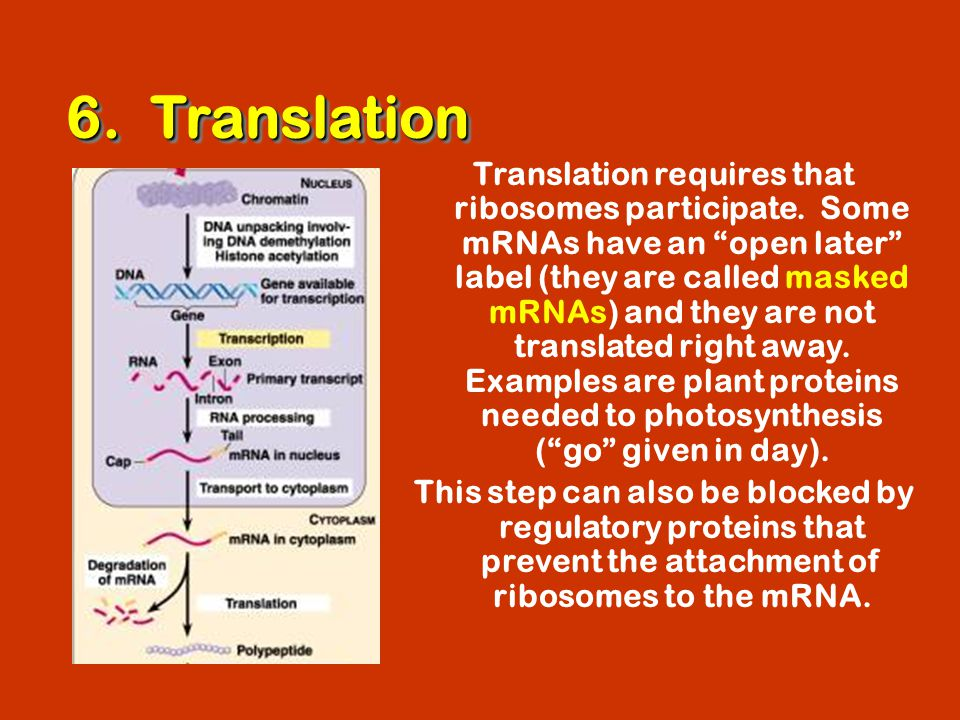 6. Translation