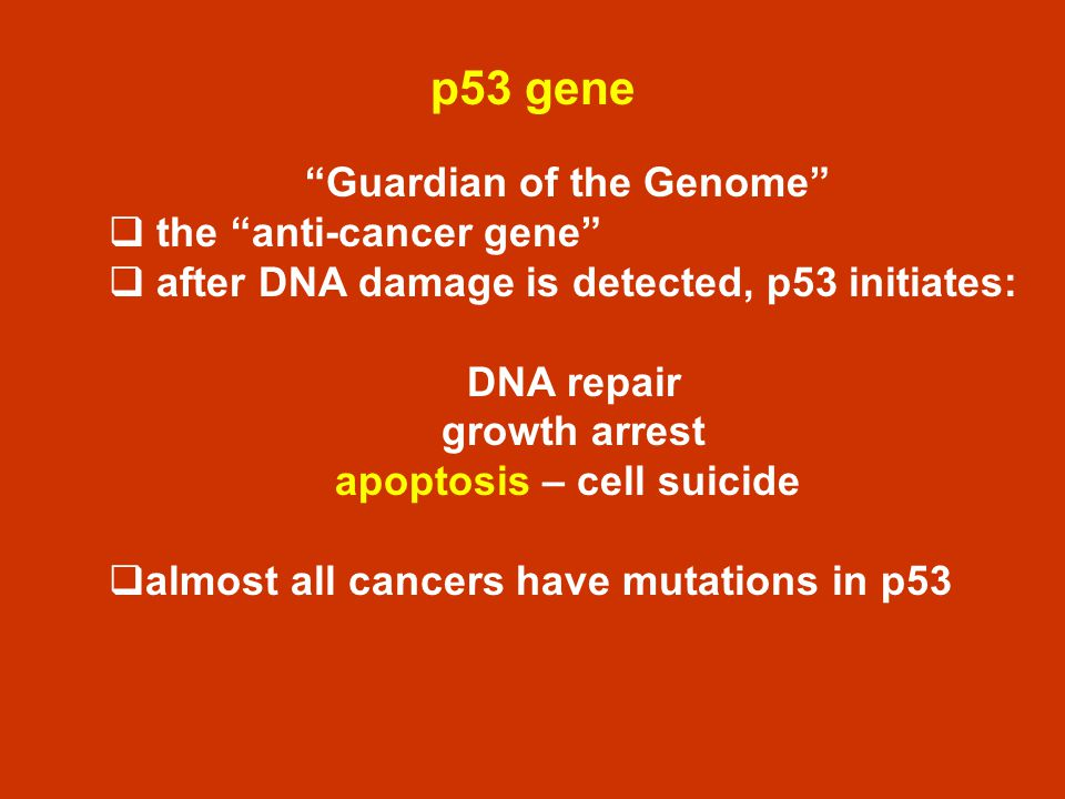 Guardian of the Genome apoptosis – cell suicide