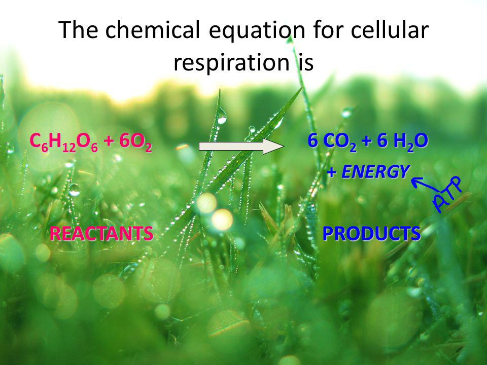 The chemical equation for cellular respiration is