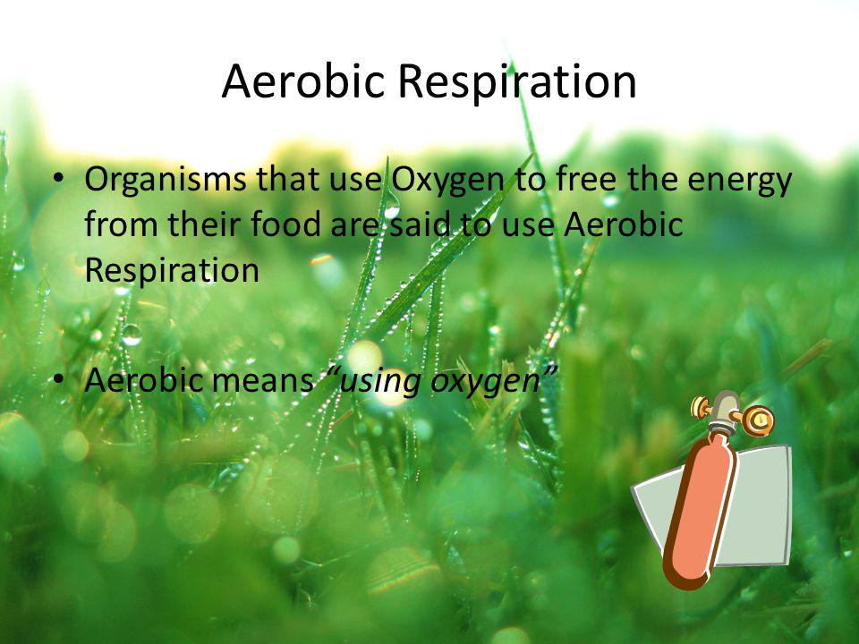 Aerobic Respiration Organisms that use Oxygen to free the energy from their food are said to use Aerobic Respiration.