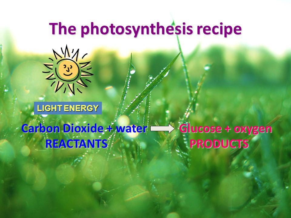 The photosynthesis recipe