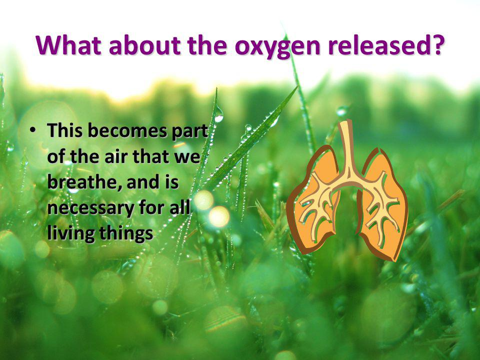 What about the oxygen released
