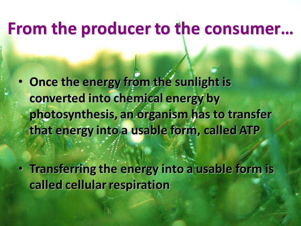 From the producer to the consumer…