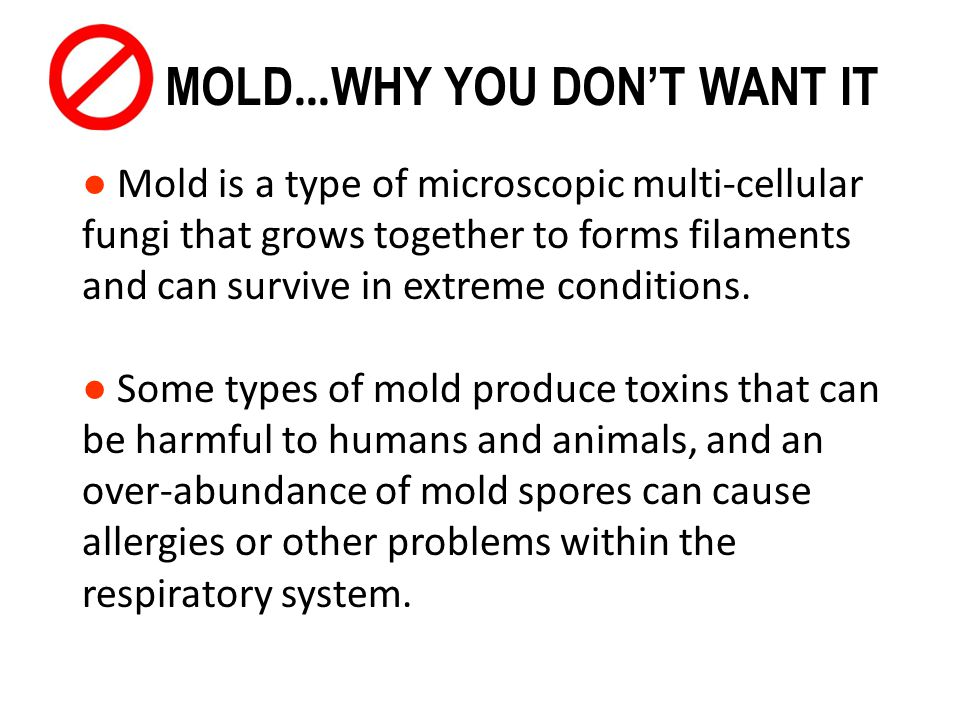 MOLD…WHY YOU DON'T WANT IT