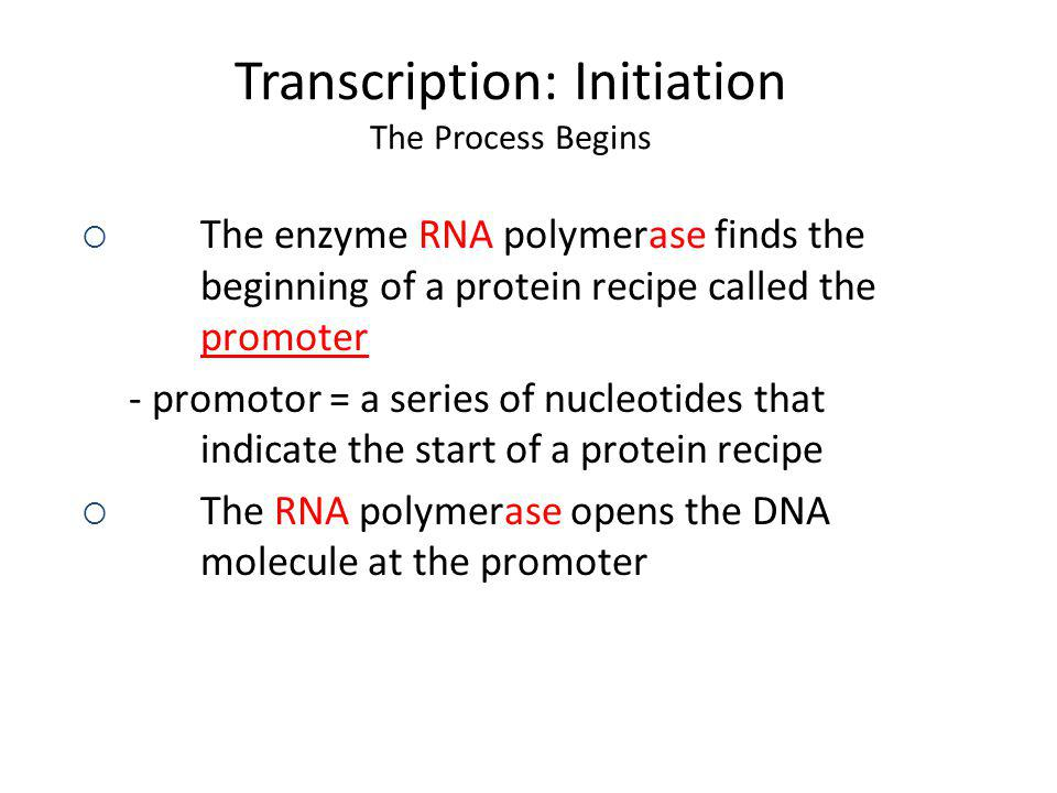Transcription: Initiation The Process Begins