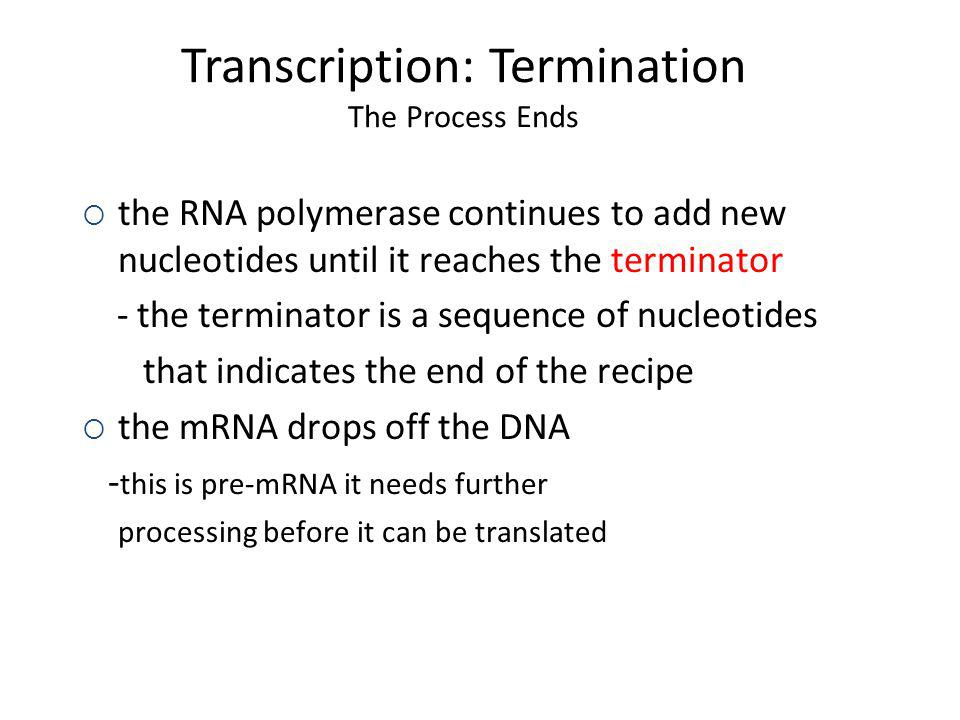Transcription: Termination The Process Ends