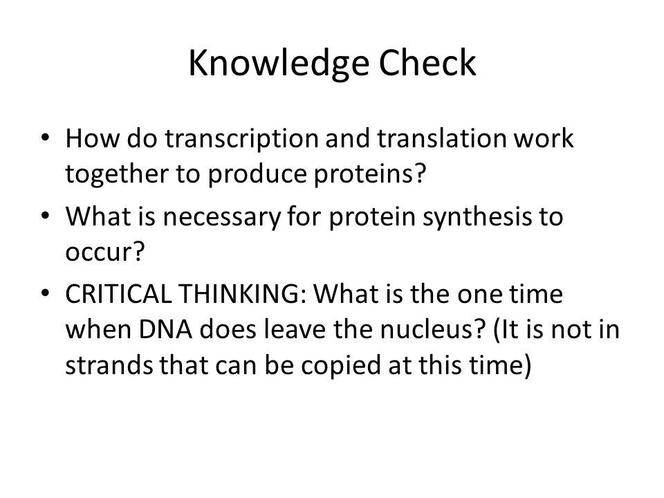 Knowledge Check How do transcription and translation work together to produce proteins What is necessary for protein synthesis to occur