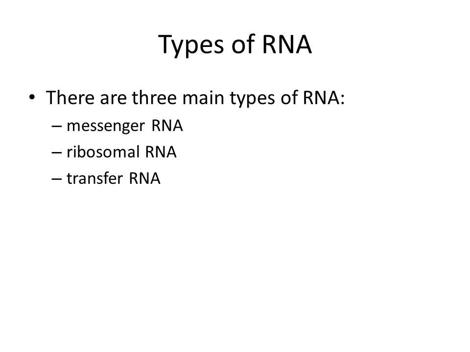 Types of RNA There are three main types of RNA: messenger RNA