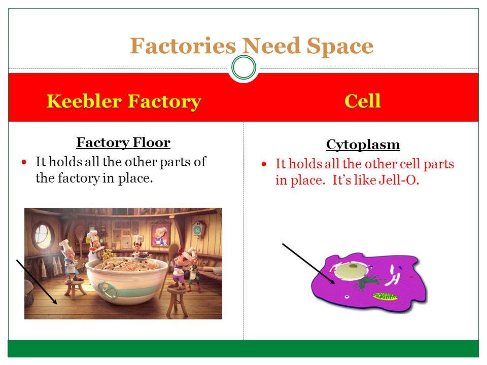 Factories Need Space Keebler Factory Cell Factory Floor Cytoplasm