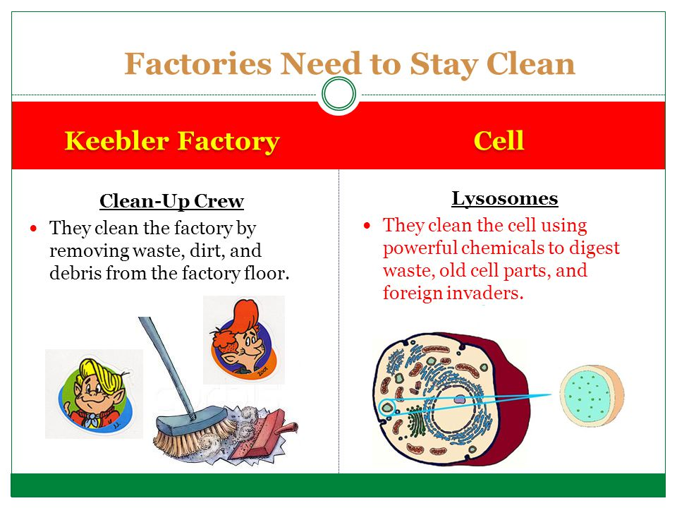 Factories Need to Stay Clean