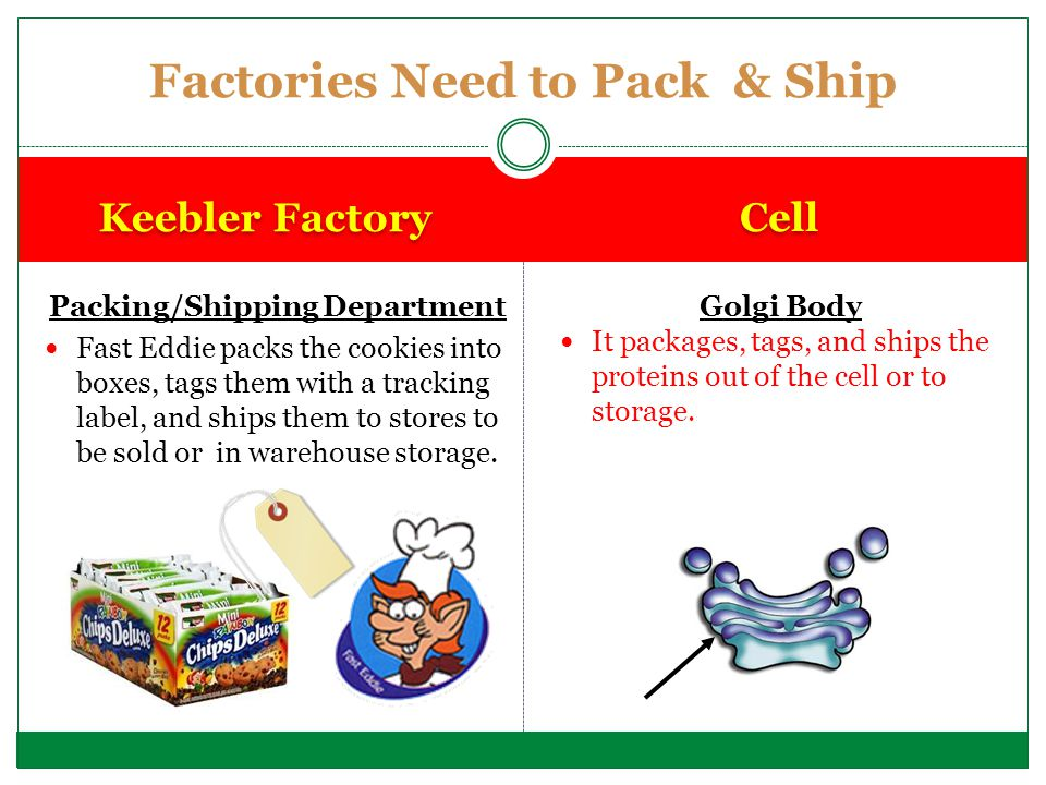 Factories Need to Pack & Ship