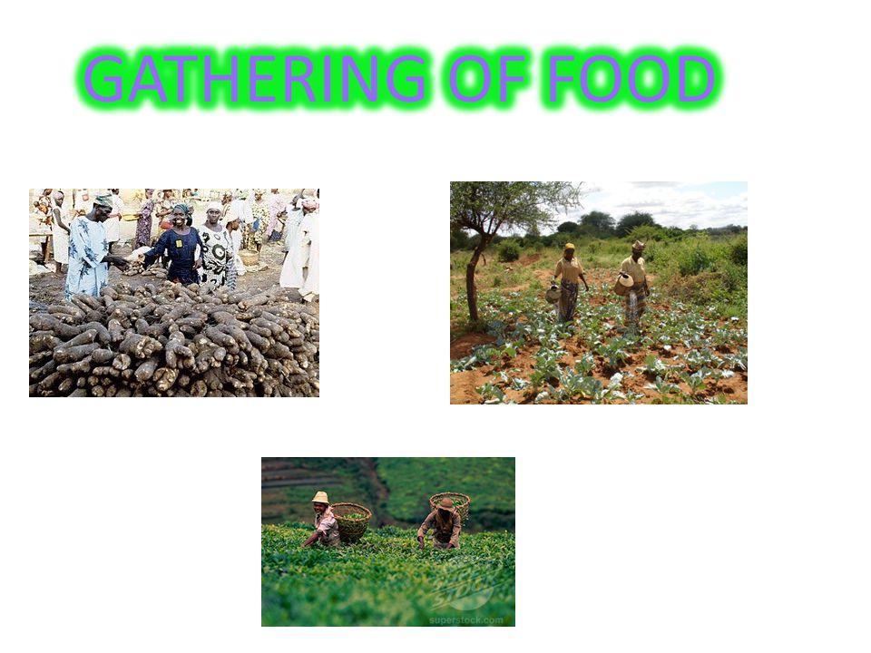 GATHERING OF FOOD