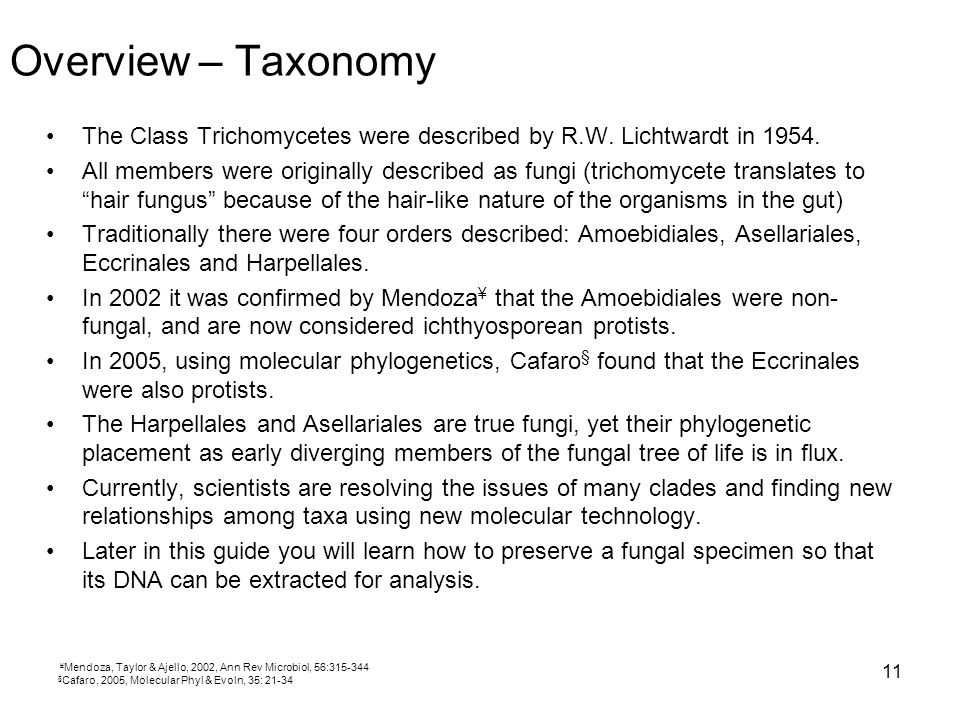 Overview – Taxonomy The Class Trichomycetes were described by R.W. Lichtwardt in 1954.