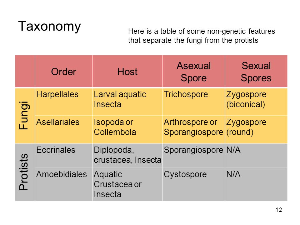 Taxonomy Fungi Protists Order Host Asexual Spore Sexual Spores