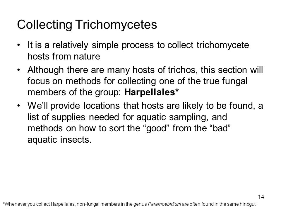 Collecting Trichomycetes