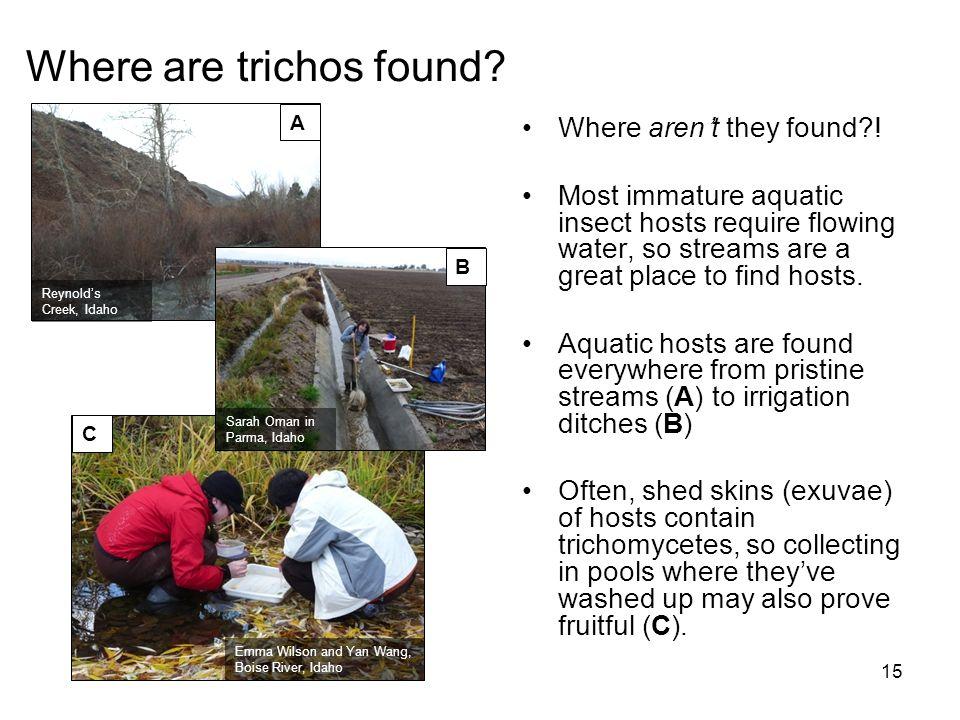 Where are trichos found