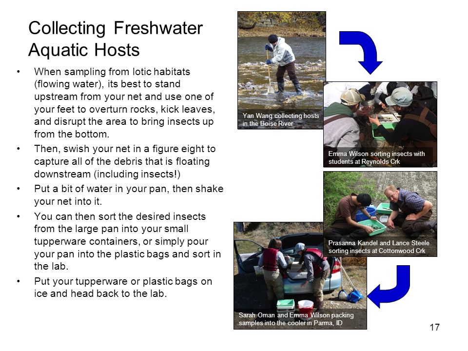 Collecting Freshwater Aquatic Hosts