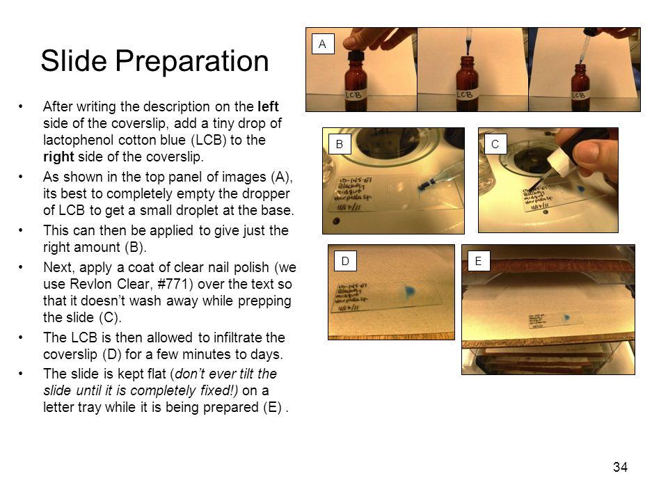 Slide Preparation A.