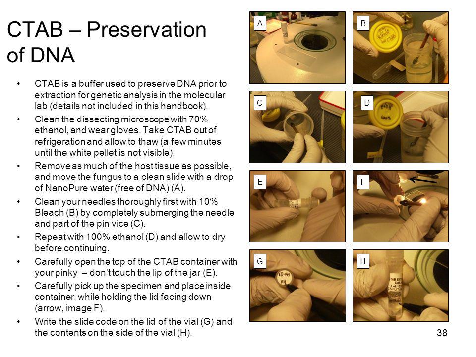 CTAB – Preservation of DNA
