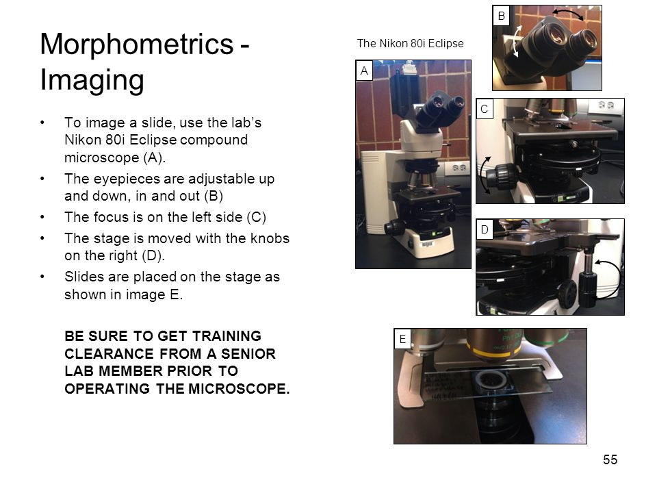 Morphometrics - Imaging