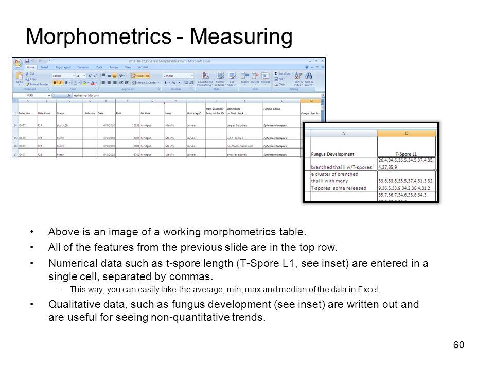 Morphometrics - Measuring