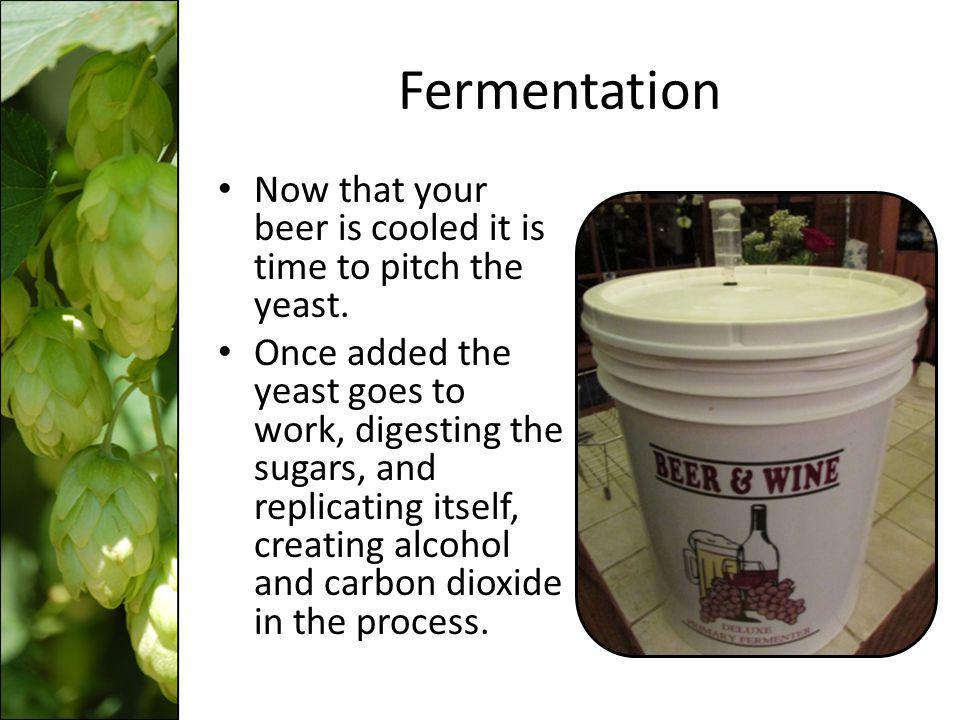 Fermentation Now that your beer is cooled it is time to pitch the yeast.