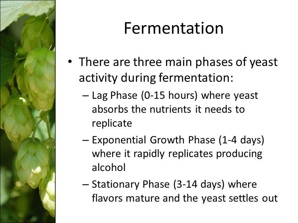 Fermentation There are three main phases of yeast activity during fermentation: