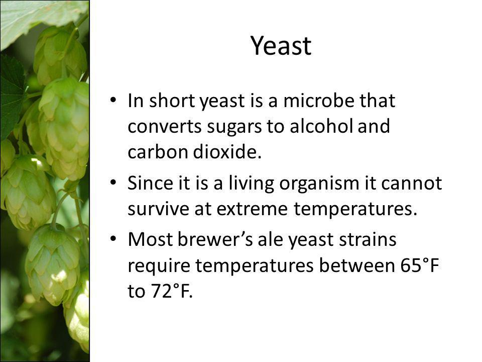 Yeast In short yeast is a microbe that converts sugars to alcohol and carbon dioxide.