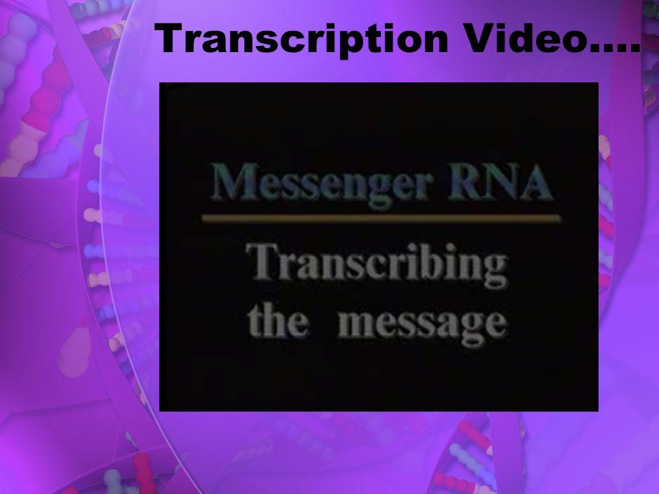 Transcription Video….