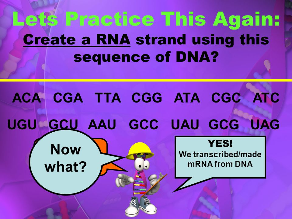 We transcribed/made mRNA from DNA