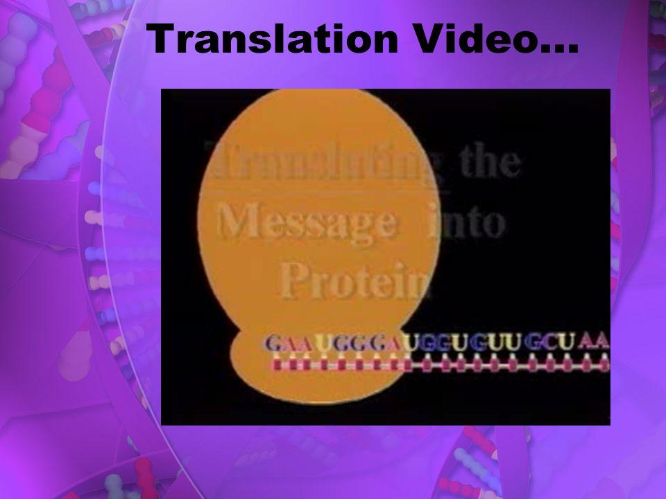 Translation Video...