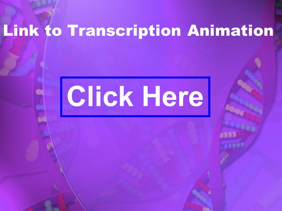 Link to Transcription Animation