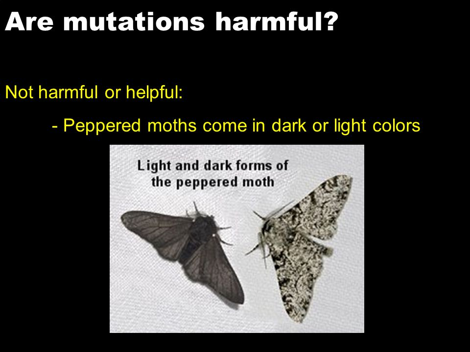 Are mutations harmful Not harmful or helpful:
