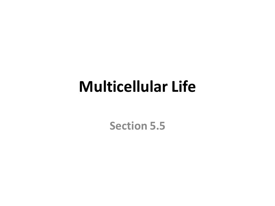Multicellular Life Section 5.5