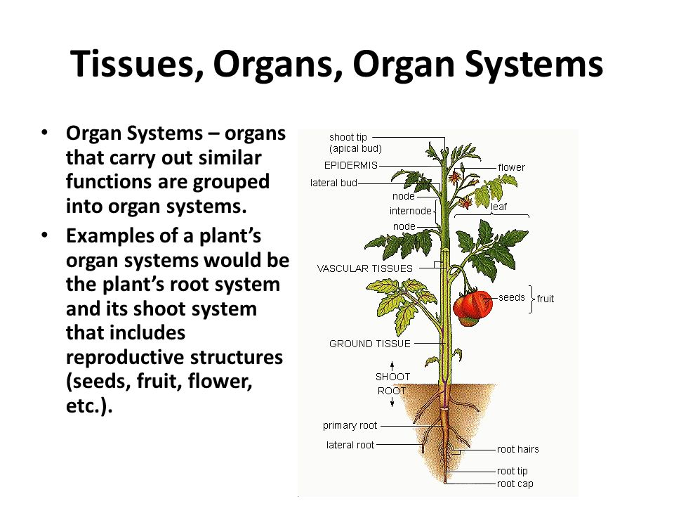 function of plant organs Functions of plant organs flowers plants may have flowers that are all male or all female (called 'dioecious' meaning two houses or dwellings) or they may have flowers of both sexes on a single plant (monoecious).