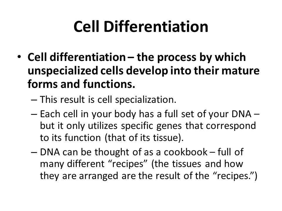 Cell Differentiation Cell differentiation – the process by which unspecialized cells develop into their mature forms and functions.