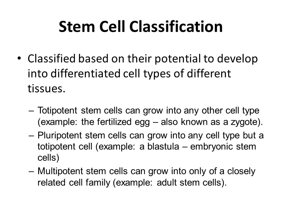 Stem Cell Classification