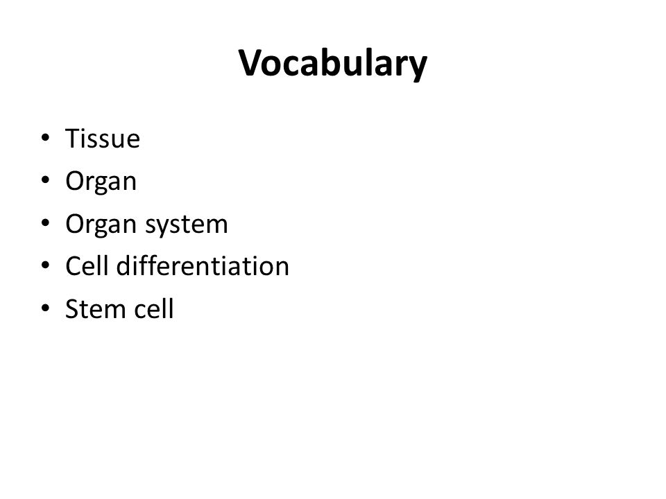 Vocabulary Tissue Organ Organ system Cell differentiation Stem cell