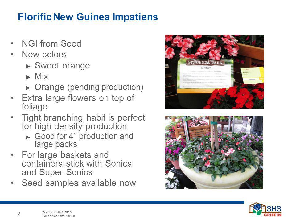 Florific New Guinea Impatiens