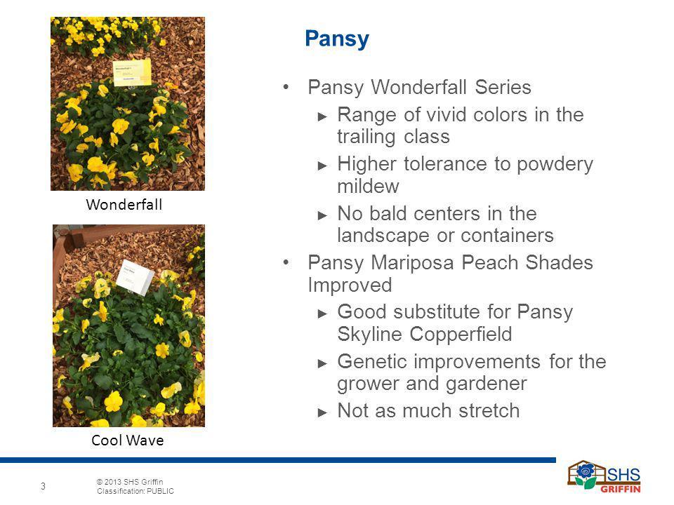 Pansy Pansy Wonderfall Series