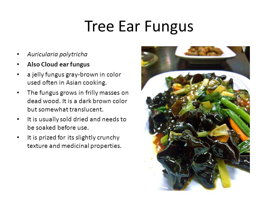 Tree Ear Fungus Auricularia polytricha Also Cloud ear fungus