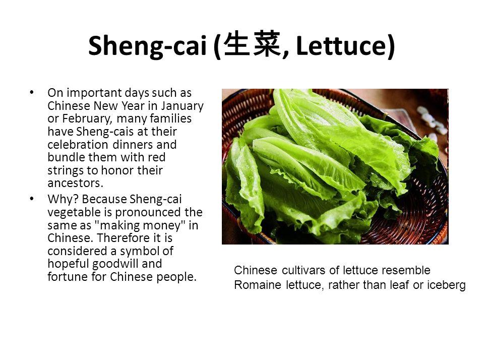 Sheng-cai (生菜, Lettuce)