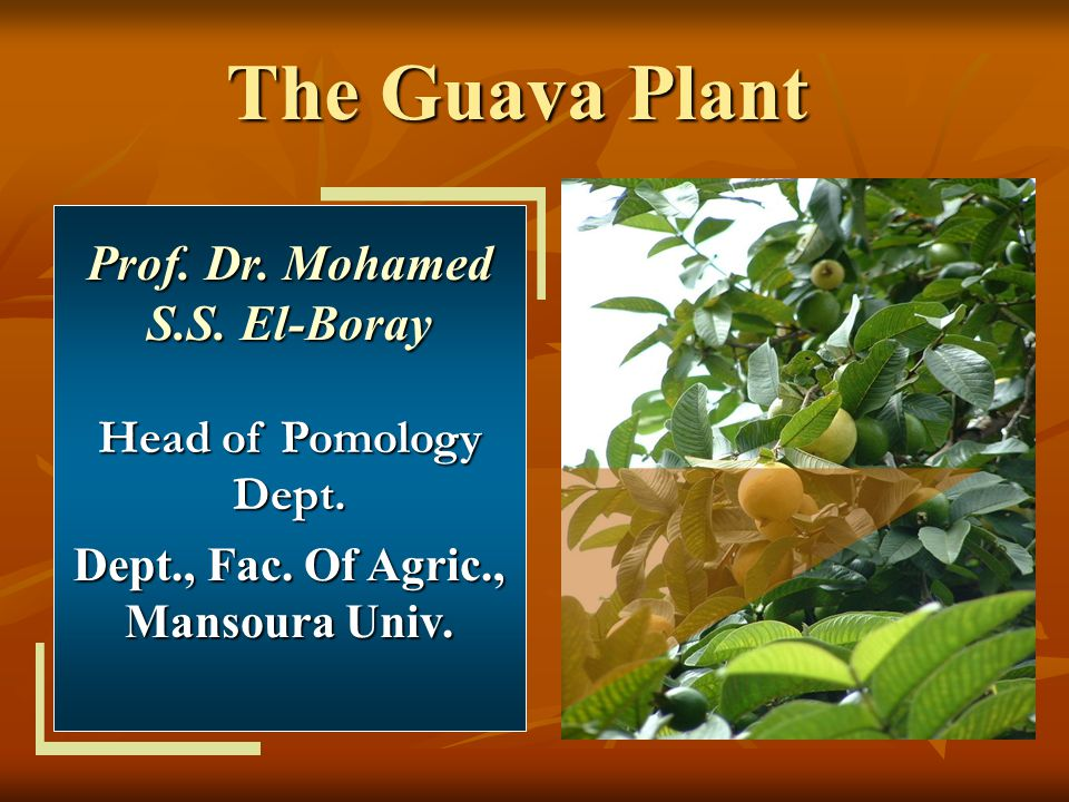 Prof. Dr. Mohamed S.S. El-Boray Dept., Fac. Of Agric., Mansoura Univ.