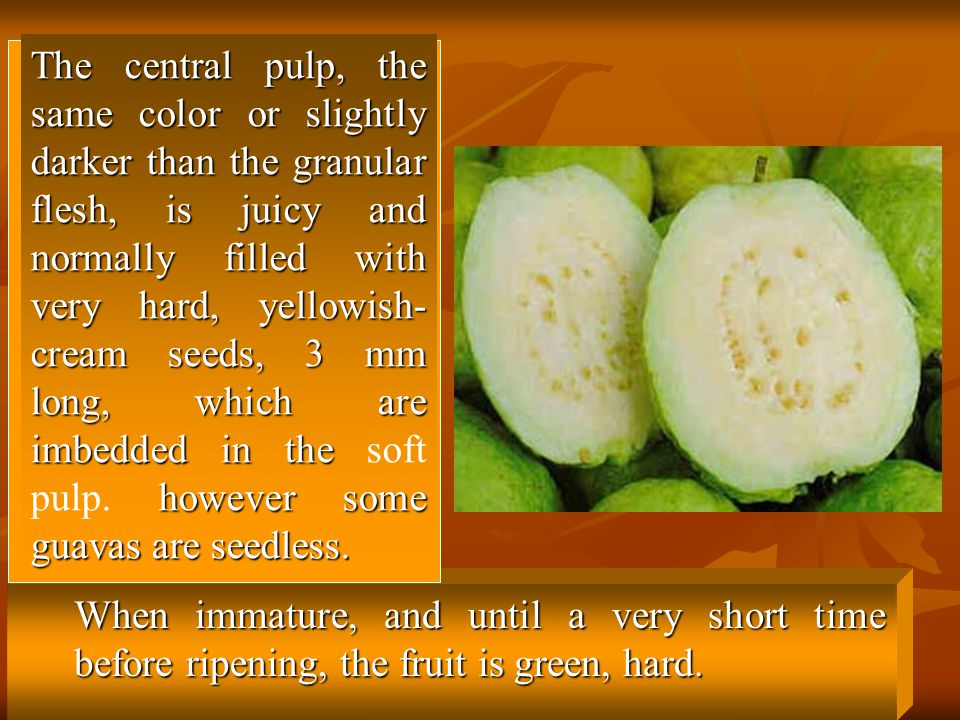 The central pulp, the same color or slightly darker than the granular flesh, is juicy and normally filled with very hard, yellowish-cream seeds, 3 mm long, which are imbedded in the soft pulp. however some guavas are seedless.