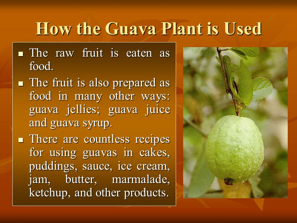 How the Guava Plant is Used