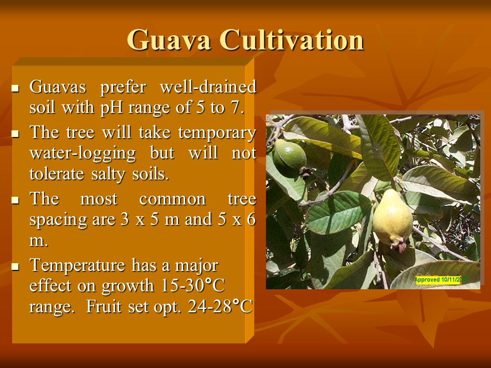Guava Cultivation Guavas prefer well-drained soil with pH range of 5 to 7.