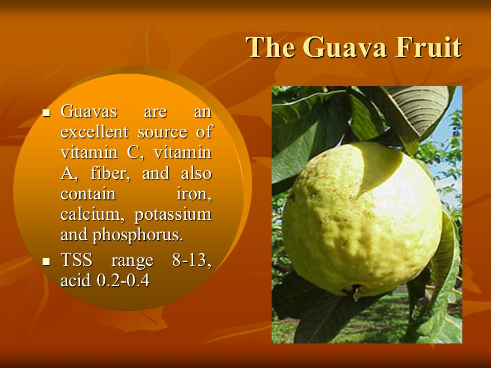 The Guava Fruit Guavas are an excellent source of vitamin C, vitamin A, fiber, and also contain iron, calcium, potassium and phosphorus.