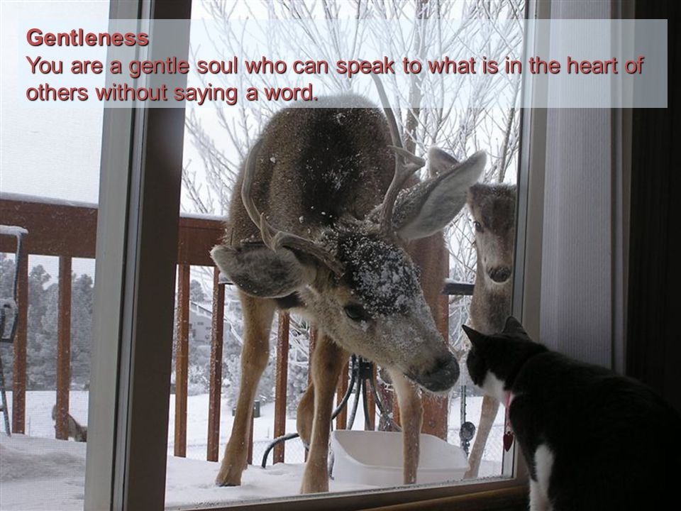 Gentleness You are a gentle soul who can speak to what is in the heart of others without saying a word.